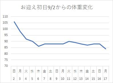 オカメインコの体重変化(お迎えから2週間)