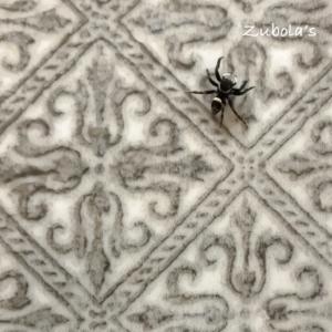 """""""小1の息子が夏休み""""の、ある日のスケジュール(無職な私の)/コンロ脇のタイルを散策中の蜘蛛。キライだけどキレイ。"""