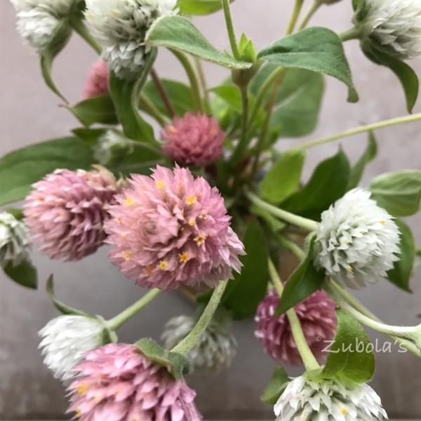 安い花のほうがカッコ良かったりする。130円のセンニチコウに思う。 ポイントは「仰々しくない」花を選ぶこと