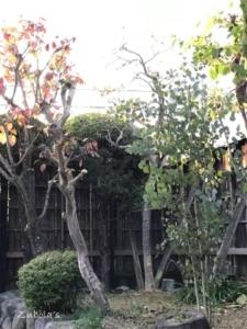 フレッシュな枝物の心地よさ。ユーカリ植えて正解!